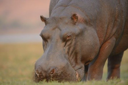 Last minute dovolenka - ZIMBABWE - BOTSWANA - KOMFORTNĚJI - Fotosafari