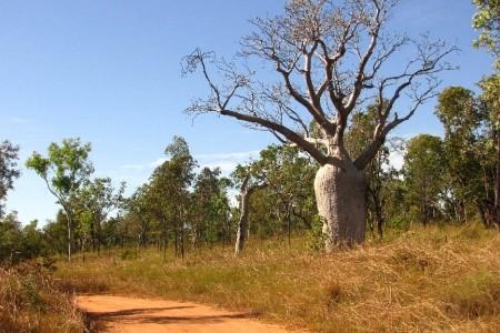 Dovolenka  - Austrália - Australské dobrodružství – pouští a pralesem
