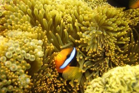 Dovolenka  - Austrália - Austrálie-Expedice Pro Potápěče Na Velký Bariérový Útes