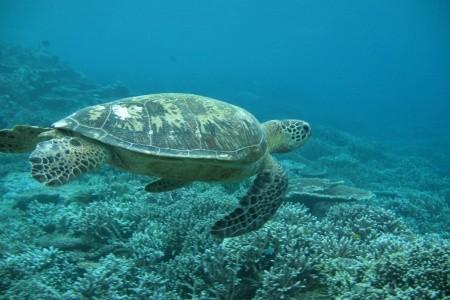 Dovolenka  - Austrália - Ztracený Ostrov Lord Howe