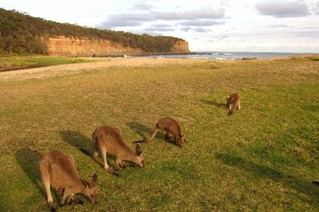 Dovolenka  - Austrália - Australský zlatý trojúhelník