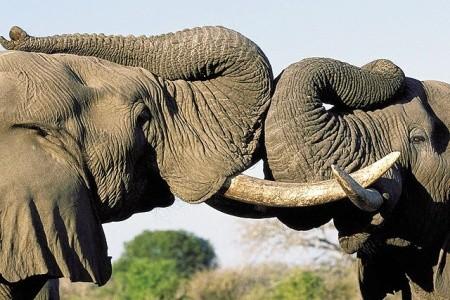 First moment  - Zimbabwe - Botswana - JAR