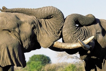 Ultra last moment  - Zimbabwe - Botswana - JAR