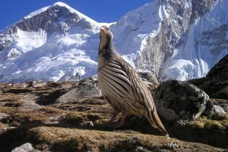 Nepál aktivně