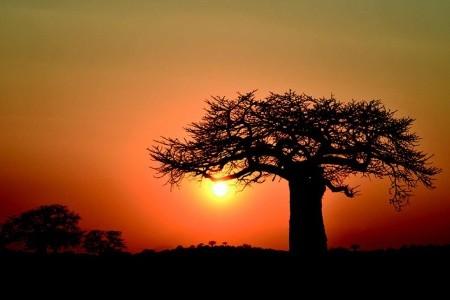 Dovolenka  - Tanzánia - Centrální Tanzanie - Zanzibar - Fotosafari vdivočině