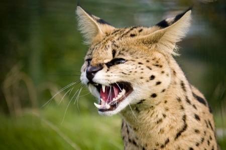 Dovolenka  - Zambia - Malawi - Zambie - Mimořádné safari v málo známé Africe