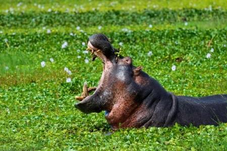 Dovolenka  - Uganda - Rwanda - Uganda - Horské gorily v zeleném srdci Afriky