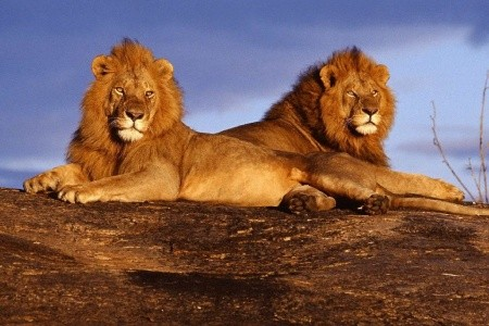 Dovolenka  - Keňa - Keňa - Tanzanie safari - Svýstupem na Mt. Keňu