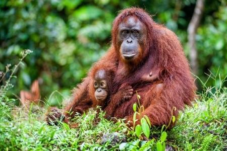 Dovolenka  - Malajzia - Borneo - Brunej - Tropická příroda s výstupem na Mt. Kinabalu