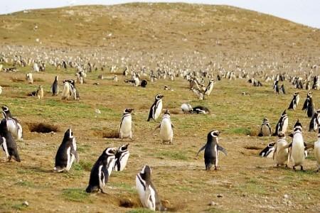 Dovolenka  - Argentína - Discover Patagonia Na Lodi Stella Australis