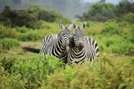 Dovolenka  - Keňa - Nejvyšší hory Afriky a safari - Mt. Keňa a Kilimandžáro
