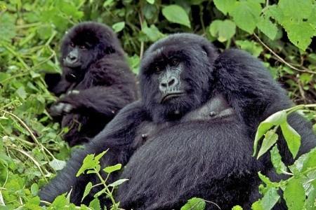 Dovolenka  - Keňa - Keňa - Uganda - Velká migrace zvířat a horské gorily