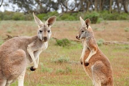 Dovolenka  - Austrália - Cesta kolem světa - economy