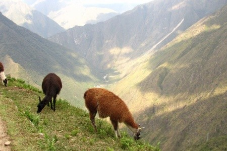 Dovolenka  - Peru - Inca Trail - Trek na Machu Picchu