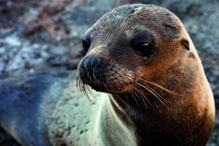 Dovolenka  - Ekvádor - Galapágy - Zvířecí Ráj Na Rovníku