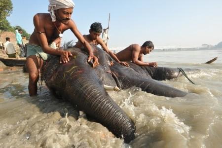 Dovolenka  - India - Indický Kaleidoskop - Od Posvátné Gangy Do Pouštních Měst Rádžastánu