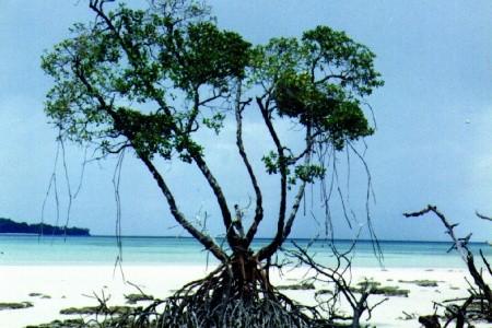 Dovolenka  - India - Andamany - Smaragdy Bengálského Zálivu