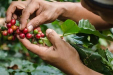 Kávové destinácie: 5 tipov na dovolenku s vôňou kávy