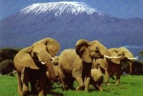 NEJVYŠŠÍ HORY AFRIKY - Výstup na Mt. Keňu a Kilimandžáro