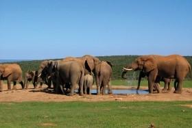 Kapské Město, Zahradní cesta a safari v Krugerově národním p