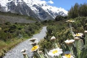 Lyžování A Poznání Na Jižním Ostrově Nového Zélandu