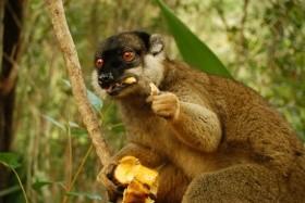 Madagaskar - Ostrov Lemurů A Baobabů