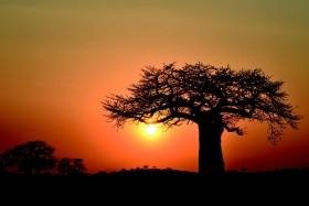 Centrální Tanzanie - Zanzibar - Fotosafari vdivočině