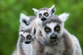 Jižní Madagaskar - Unikátní ostrov lemurů a baobabů