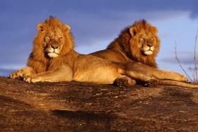 Keňa - Tanzanie safari - Zanzibar - S výstupem na Mt. Keňu