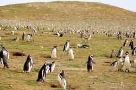 Discover Patagonia Na Lodi Stella Australis