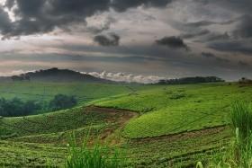 Uganda horský trek v Měsíčním pohoří Rwenzory