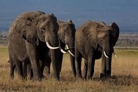 Národní Parky Amboseli A Tsavo West + Pobyt U Moře