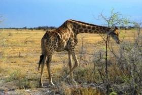 Namibie - vzpomínky na Afriku