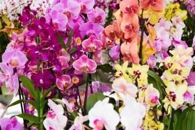 Mezinárodní výstava orchidejí v Drážďanech