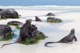 Ekvádor - Jižní Amerika v miniatuře - prodloužení Galapágy