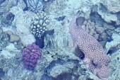 Podmorsky svet - fotka z mola