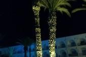 večer s palmami