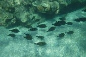 Skupinka rybek hned u břehu