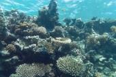 korály na pláží Coral beach