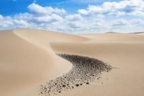 Púšť Viana