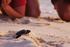 Pozorovanie korytnačiek