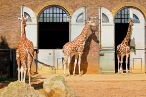 Londýnská zoologická záhrada