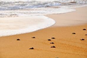 Asociácia na ochranu korytnačiek & korytnačých liaheň