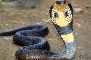 Hadí show