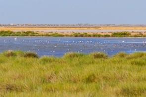 Národný park Doñana