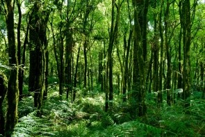 Atlantický les
