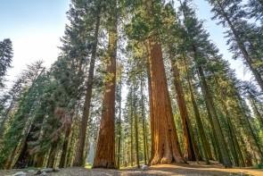 Národný park Sequoia