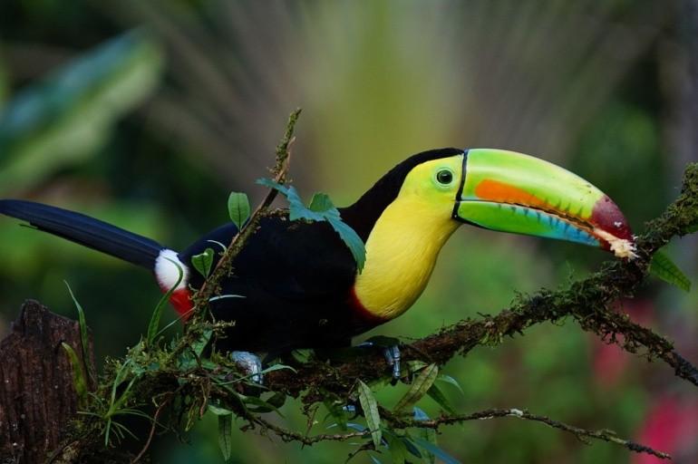 Veľké vtáky v tesnej spodná bielizeň plač čierny chlapec