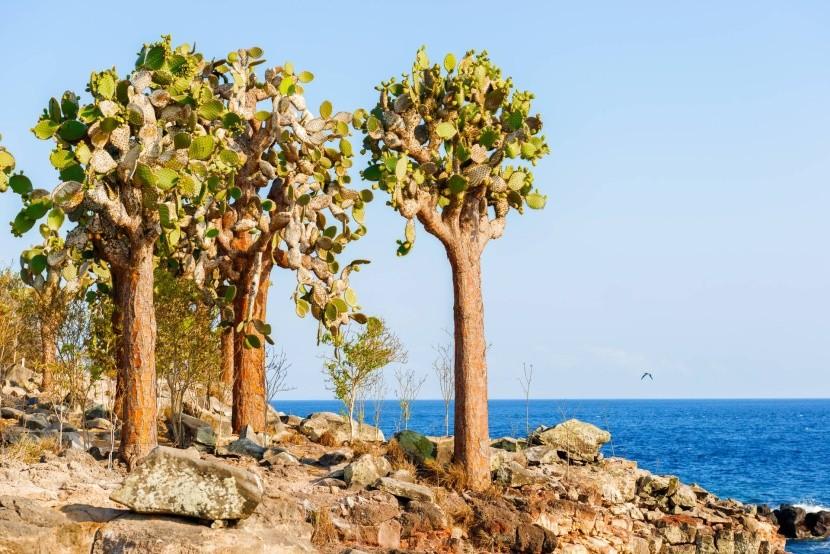 Ostrov Santa Fé