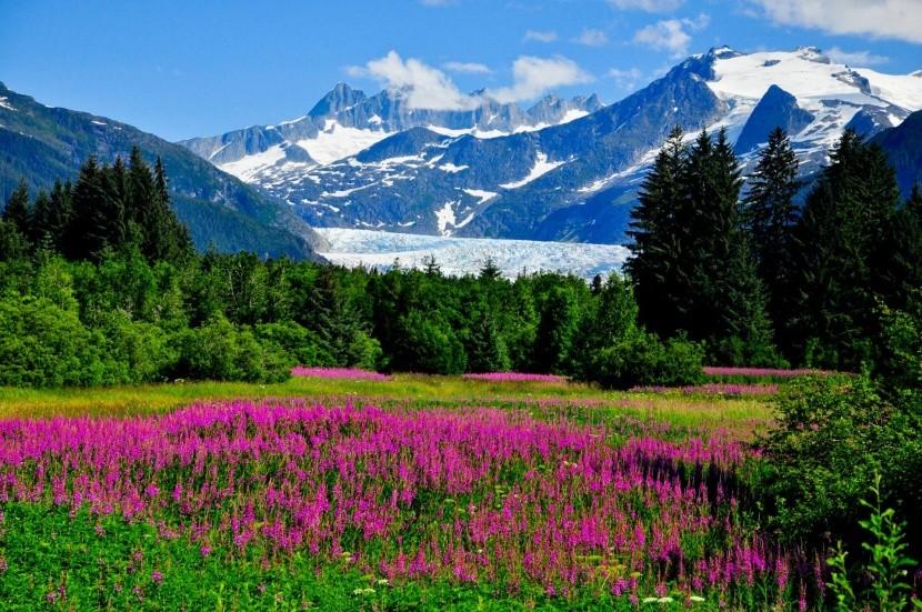 Kvitnúca Aljaška